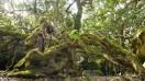 The old milkwood tree.